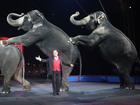 Watch Ringling elephants' final circus online