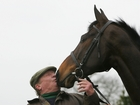 Study: Horses can read human emotion