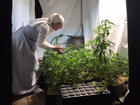 Nuns break the law by growing and selling pot