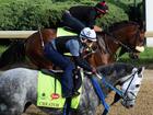 Rank your favorite Kentucky Derby horse names