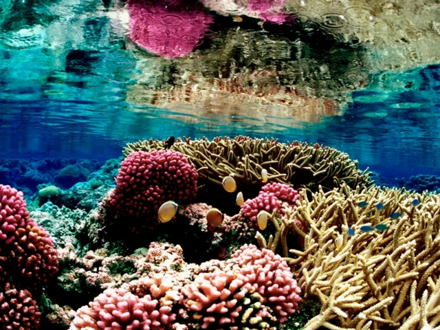 Coral Reefs Need Fish Pee To Survive, Says New Study