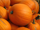 Coast Guard members throw pumpkins at each other