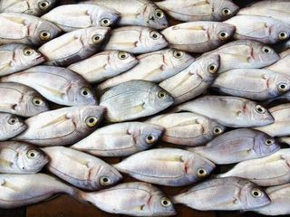 A plan to fix fisheries has scientists skeptical