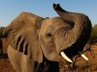 Trump pauses decision on elephant trophy imports