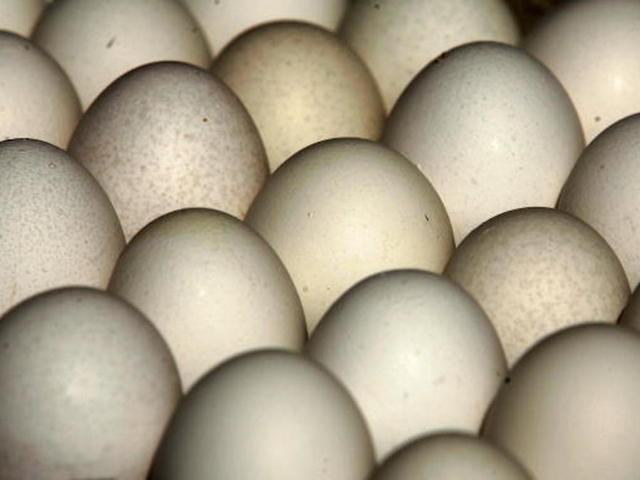 Indiana Farm Recalls More Than 200 Million Eggs over Salmonella Concerns