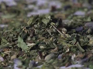Severe bleeding from weed reported in Maryland
