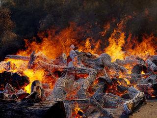 Photos: Wildfires devastation in California