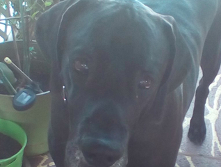 Woman sues 'service dog' owner after dog killed